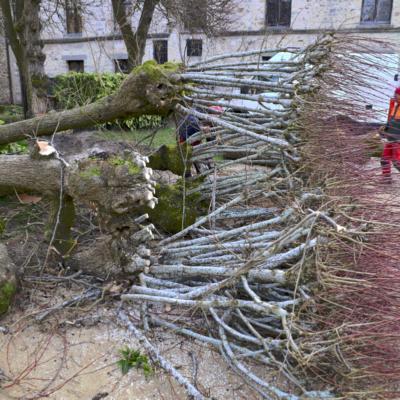 Abattage des arbres © Nicolas Piroux